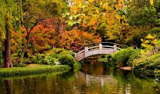 ponte 1 novembre