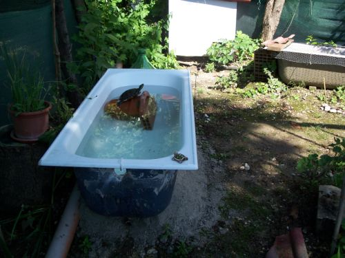 tartarughe in giardino